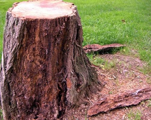 arbre_coupe