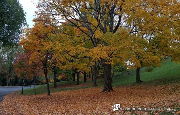 automne_montcalm