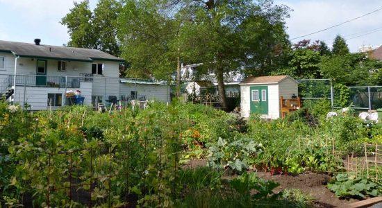 Jardinage urbain : une nouvelle « étincelle » pour mobiliser les citoyens - Suzie Genest