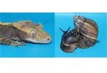 Turbo l'escargot et Édouard le Gecko