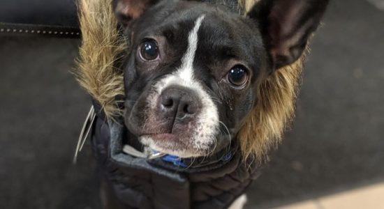 Sélection de manteaux d'hiver pour chiens | Animalerie Boutique Tropicale
