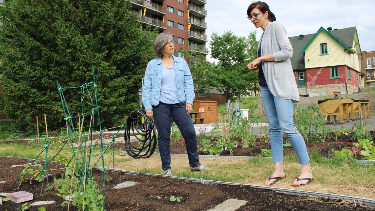 La Cité Verte se dote d'un jardin communautaire | 2 juillet 2020 | Article par Véronique Demers