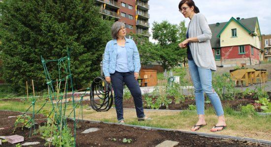 La Cité Verte se dote d'un jardin communautaire - Véronique Demers