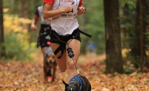 Accessoires canins «Winterson Sports» en boutique | Coureur Nordique (Le)