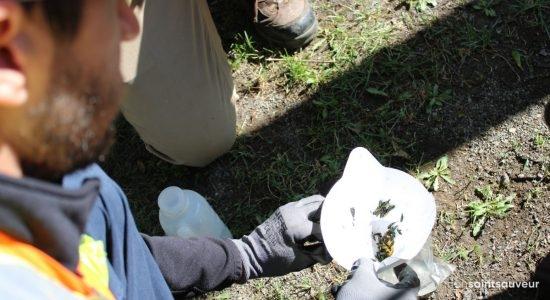 Agrile du frêne : Québec devra abattre 1000 frênes - Véronique Demers