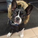 Sélection de manteaux d'hiver pour chiens - Animalerie Boutique Tropicale