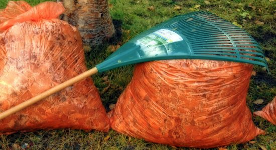Collecte automnale des feuilles : jusqu'au 21 novembre - Suzie Genest