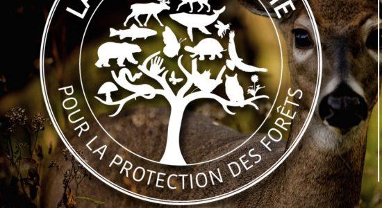 Grand rassemblement pour la protection des forêts - à Québec
